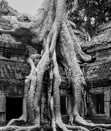 images/blog-image/tour-package/popular-tour-image/taprohm.jpg